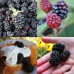 Blackberries and Peaches